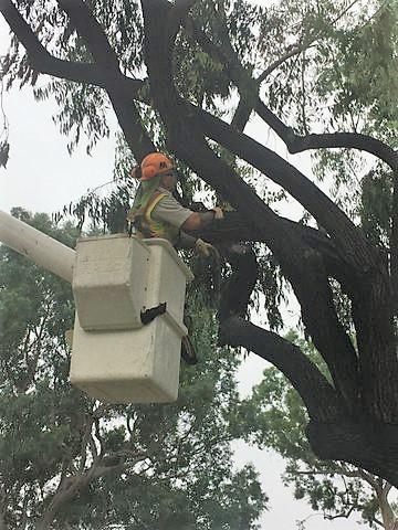 tree trimming Basket