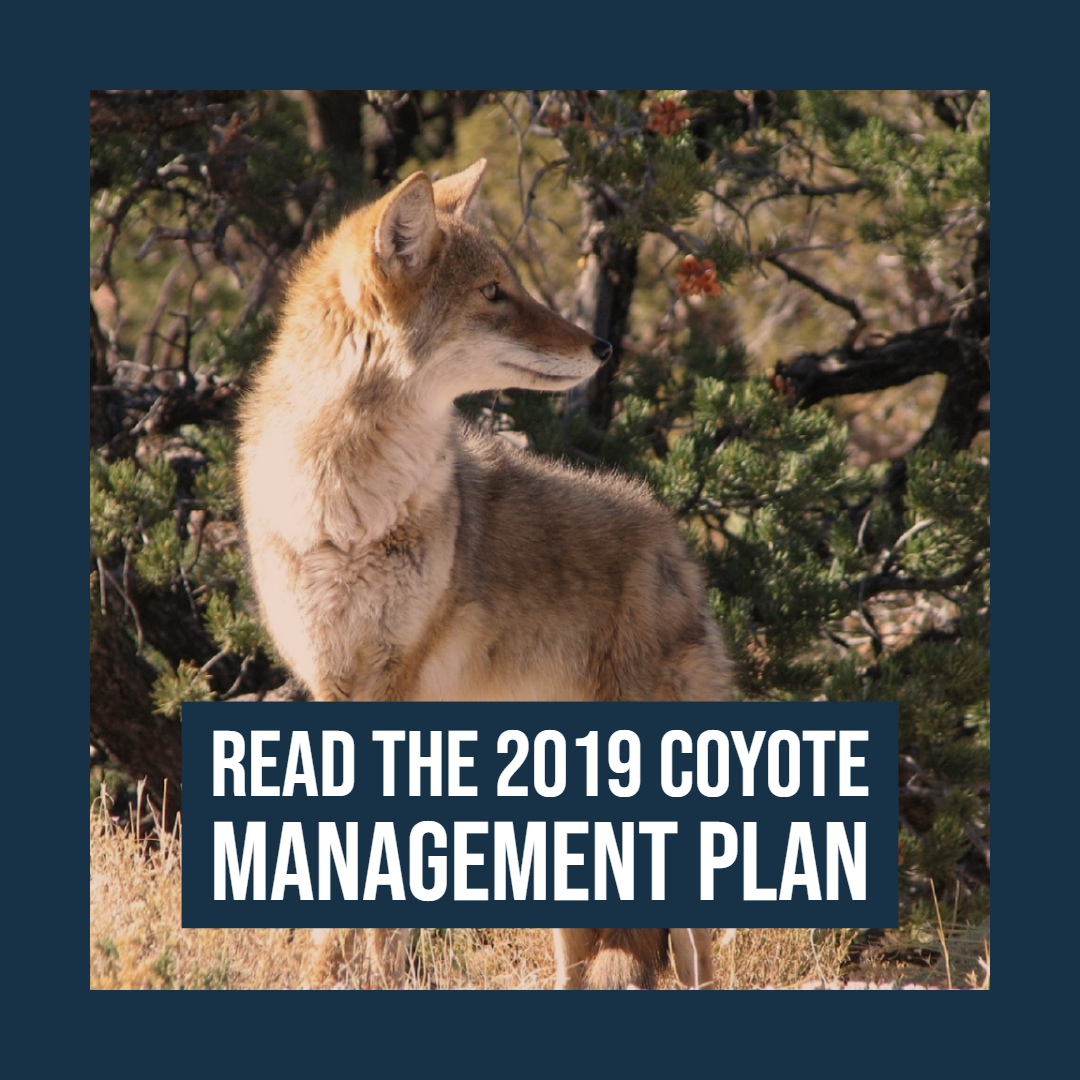 Read the Coyote Management Plan