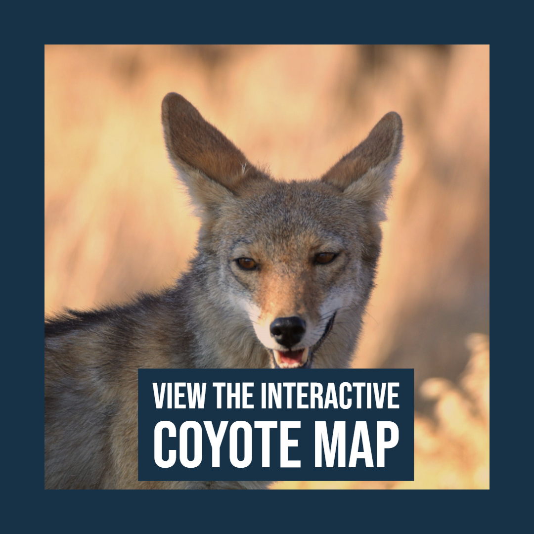 View the Interactive Coyote Map