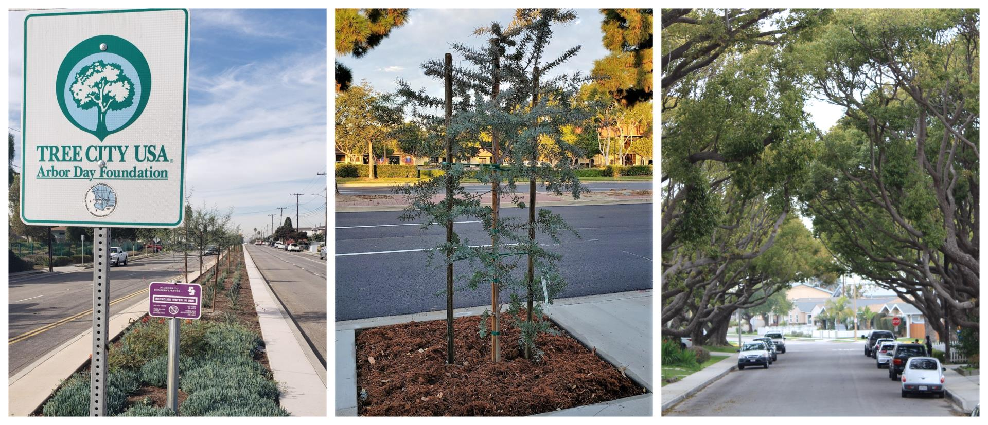 Tree Planting Collage showing tree city USA sign, a planted median tree, and beautiful canopy of trees