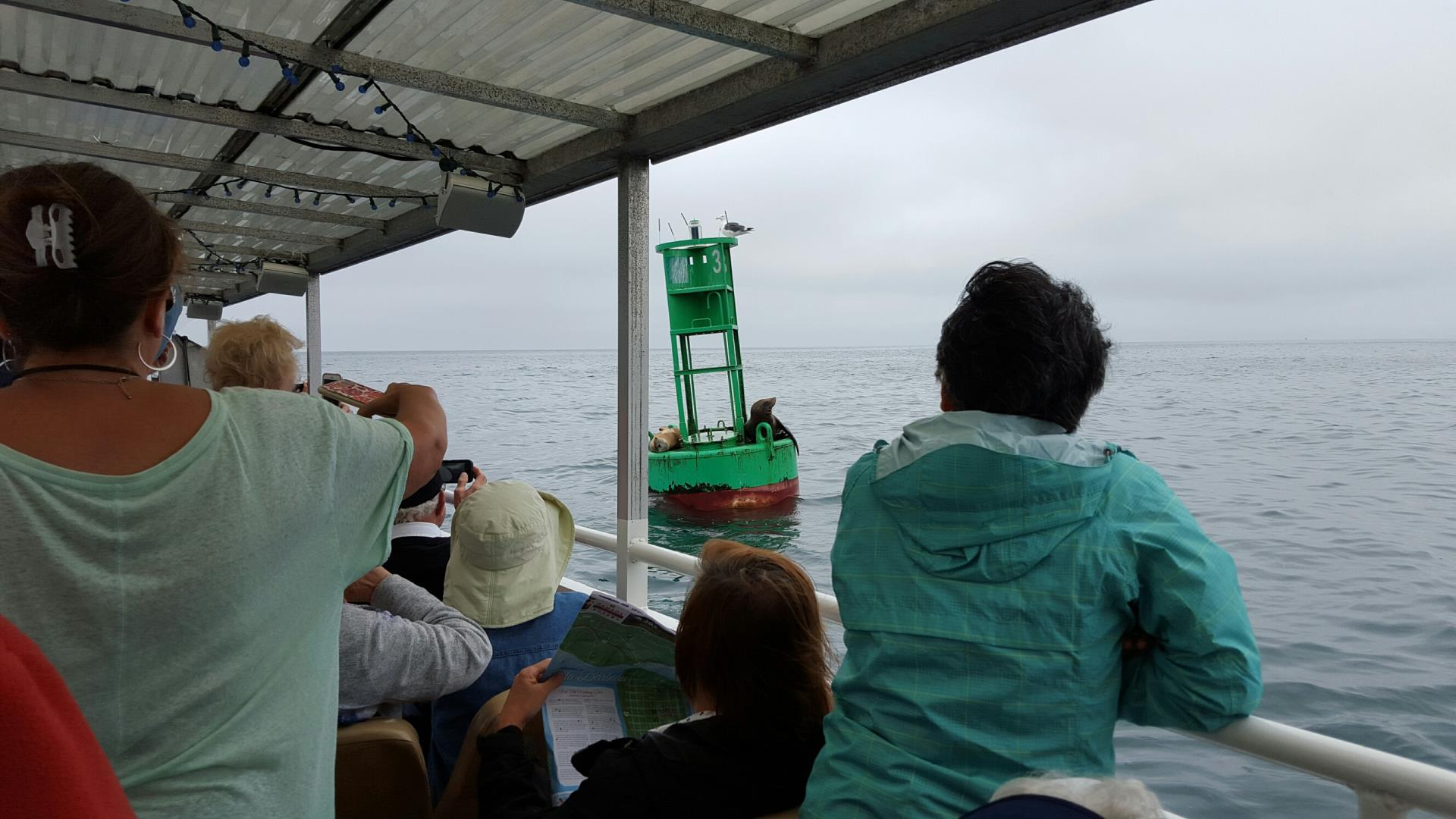 people on a boat watching Seals on Buoy