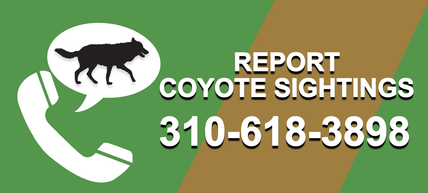 Number to Report Coyote