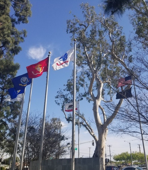 City tree behind flags